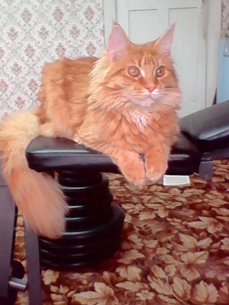 Домашние любимцы Кошки и Собаки 0602604001405845226
