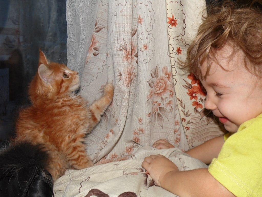 Домашние любимцы Кошки и Собаки 0769900001405846187
