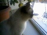 Домашние любимцы Кошки и Собаки 0455419001405921102