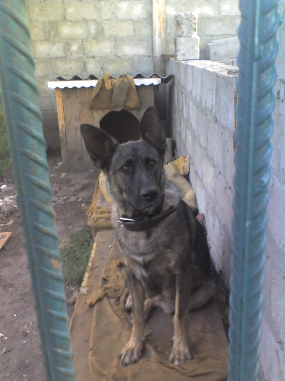Домашние любимцы Кошки и Собаки 0158601001407141954