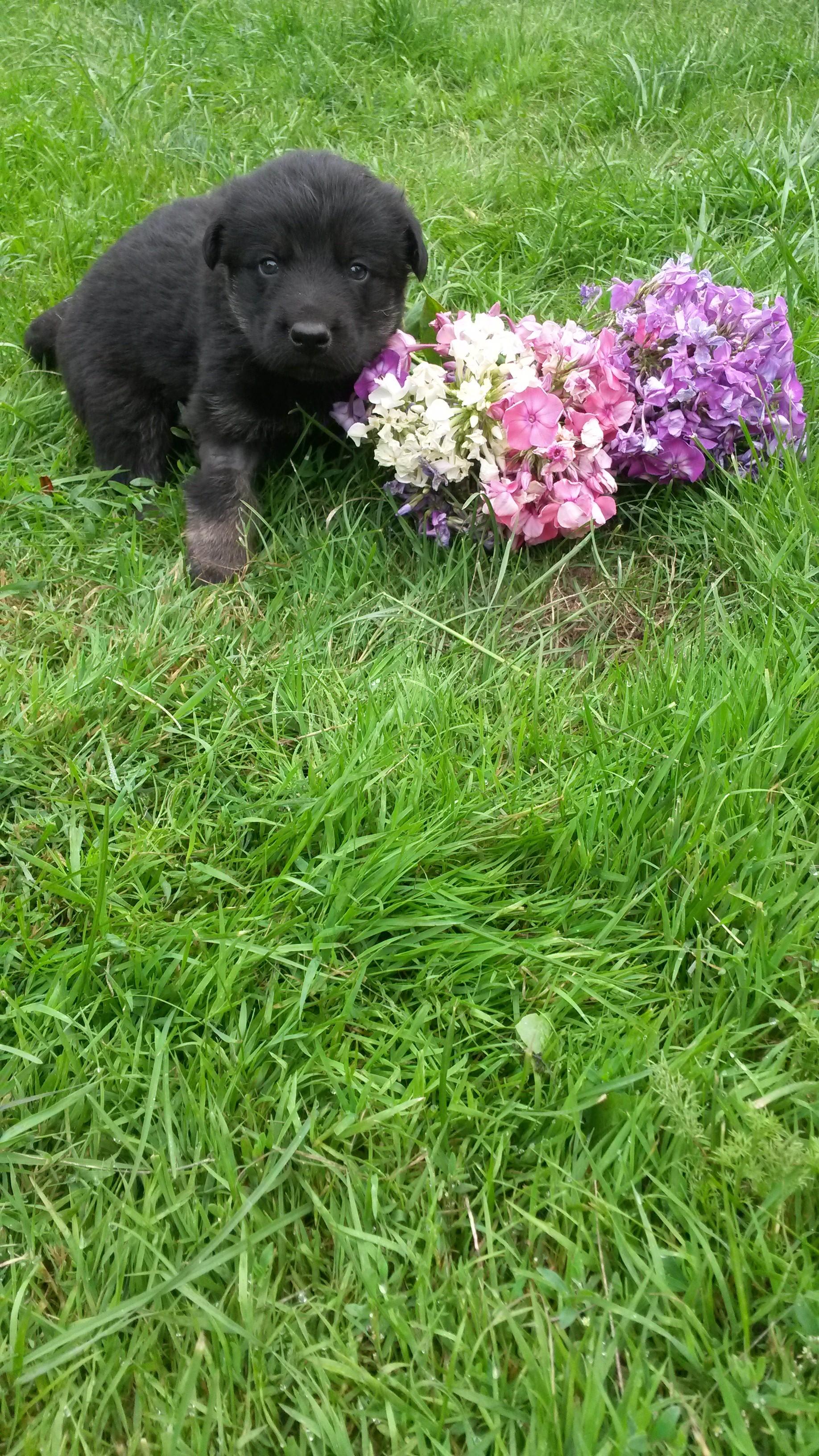 Домашние любимцы Кошки и Собаки 0494693001407140556