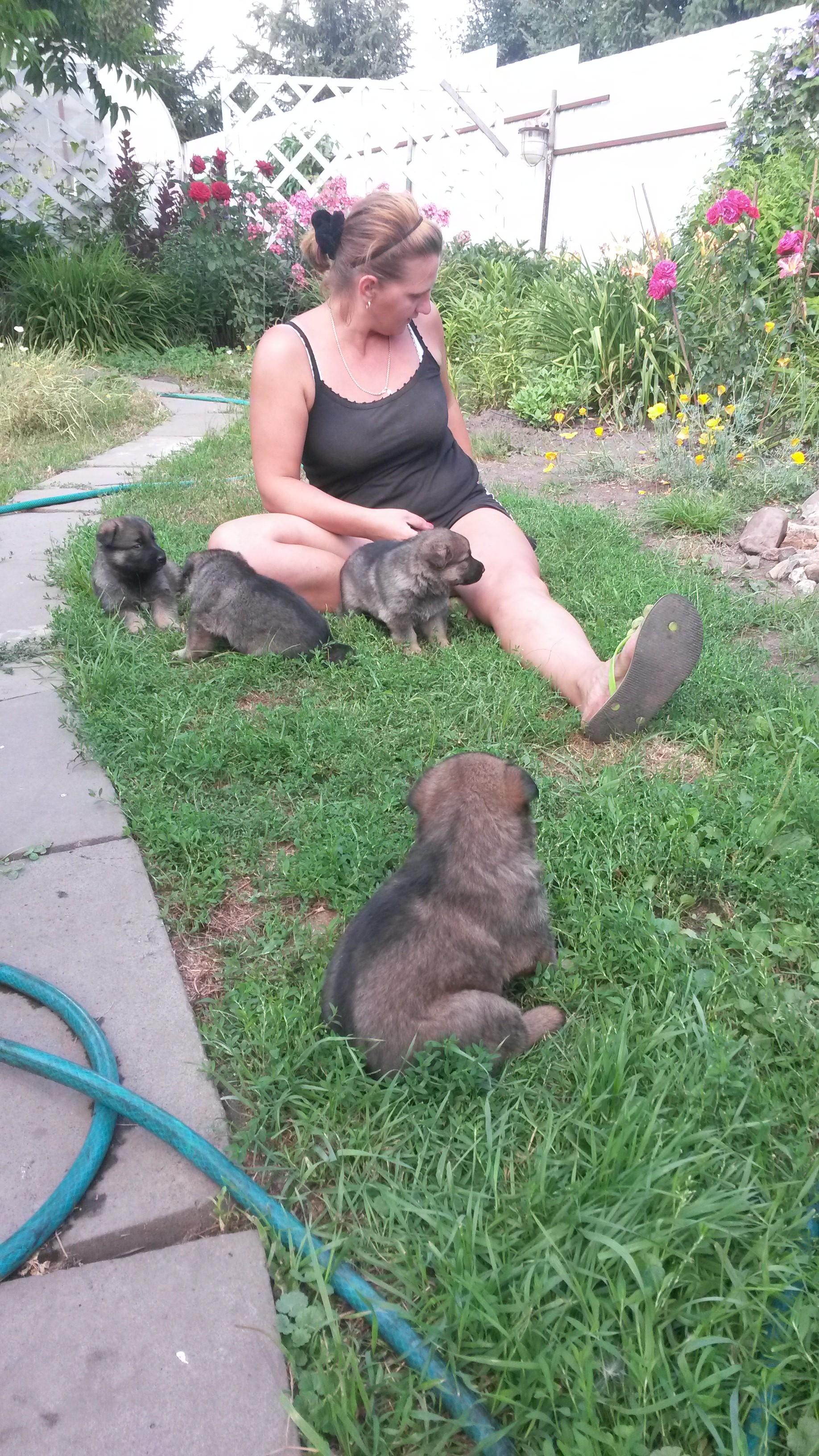 Домашние любимцы Кошки и Собаки 0919413001407140709