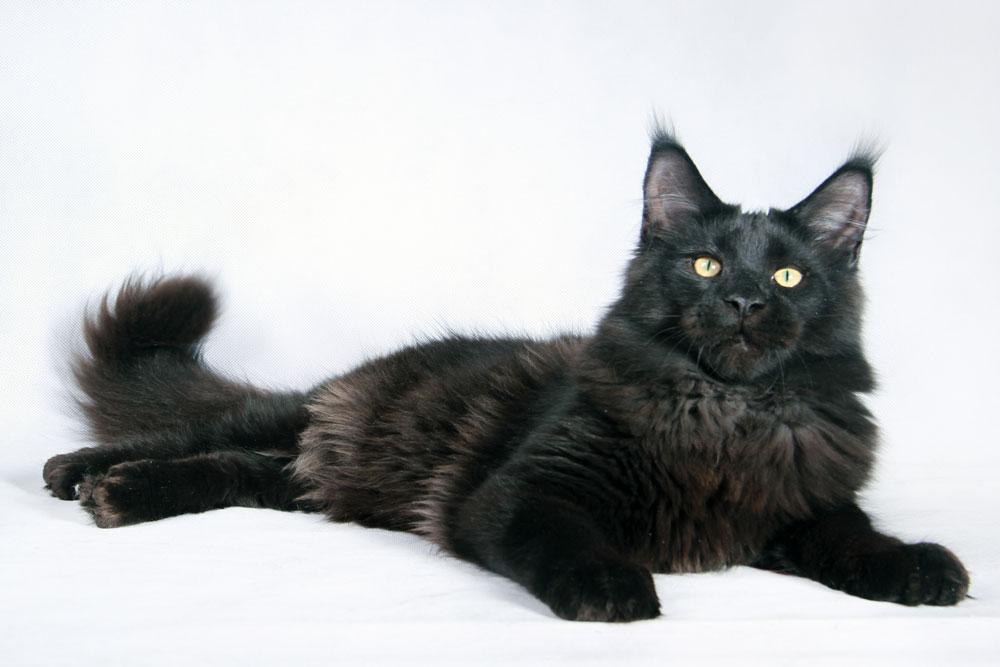 Домашние любимцы Кошки и Собаки 0052705001407242549