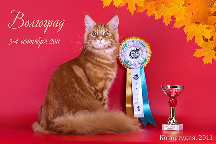 Домашние любимцы Кошки и Собаки 0253733001407242549