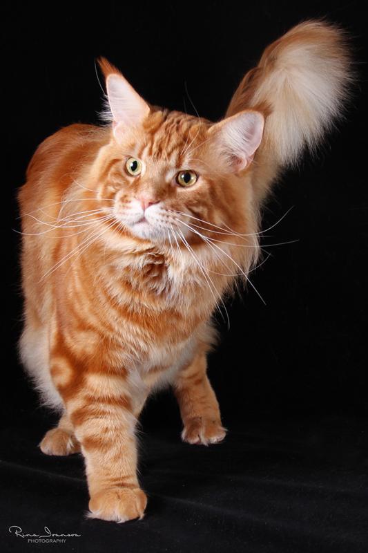 Домашние любимцы Кошки и Собаки 0283987001407242549