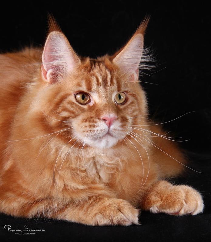 Домашние любимцы Кошки и Собаки 0418757001407242549