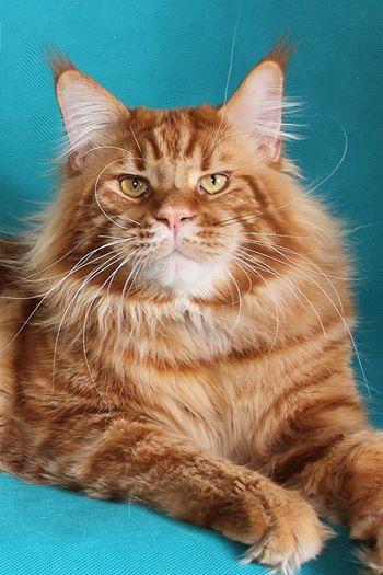 Домашние любимцы Кошки и Собаки 0469260001407242549