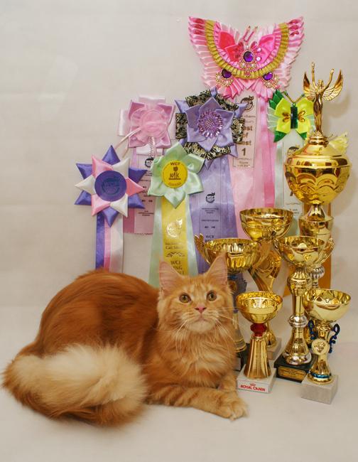 Домашние любимцы Кошки и Собаки 0191384001407393772