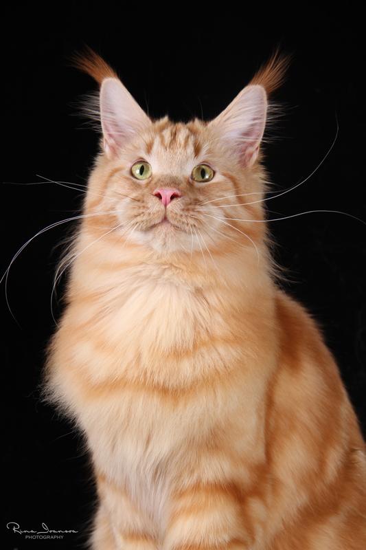 Домашние любимцы Кошки и Собаки 0368929001407393772