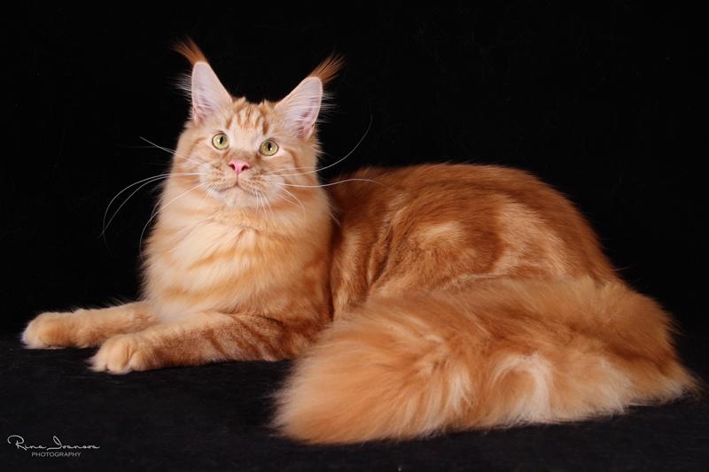 Домашние любимцы Кошки и Собаки 0410665001407393772