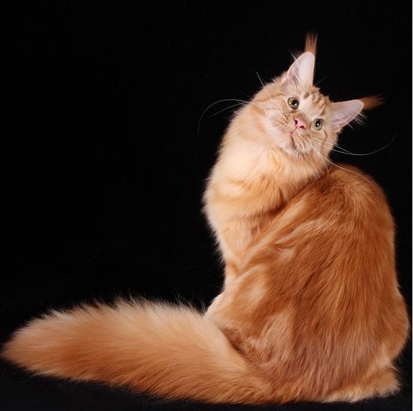 Домашние любимцы Кошки и Собаки 0445971001407393772