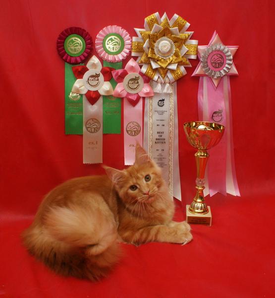 Домашние любимцы Кошки и Собаки 0471183001407393772