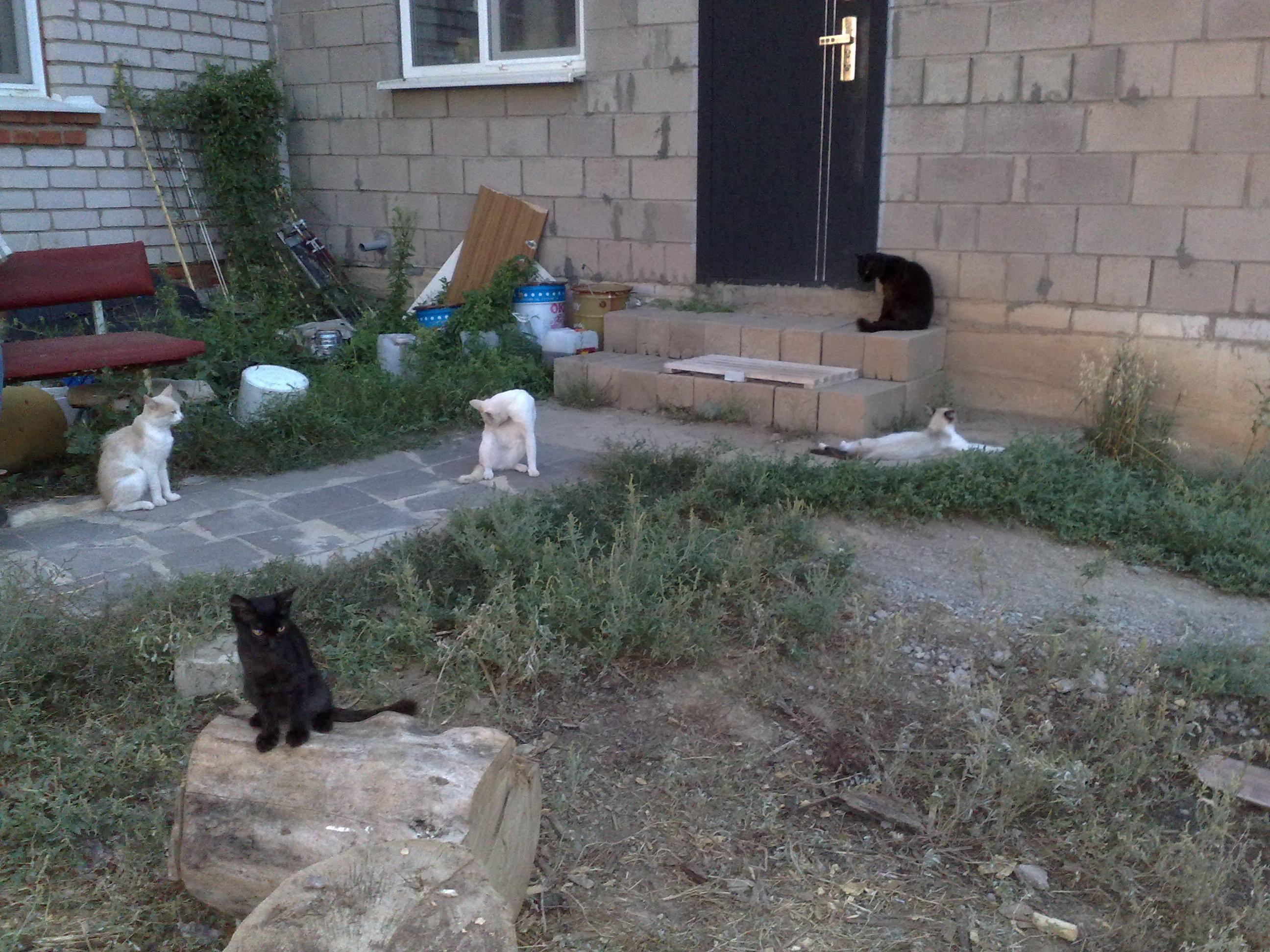 Домашние любимцы Кошки и Собаки - Страница 18 0980425001470898555