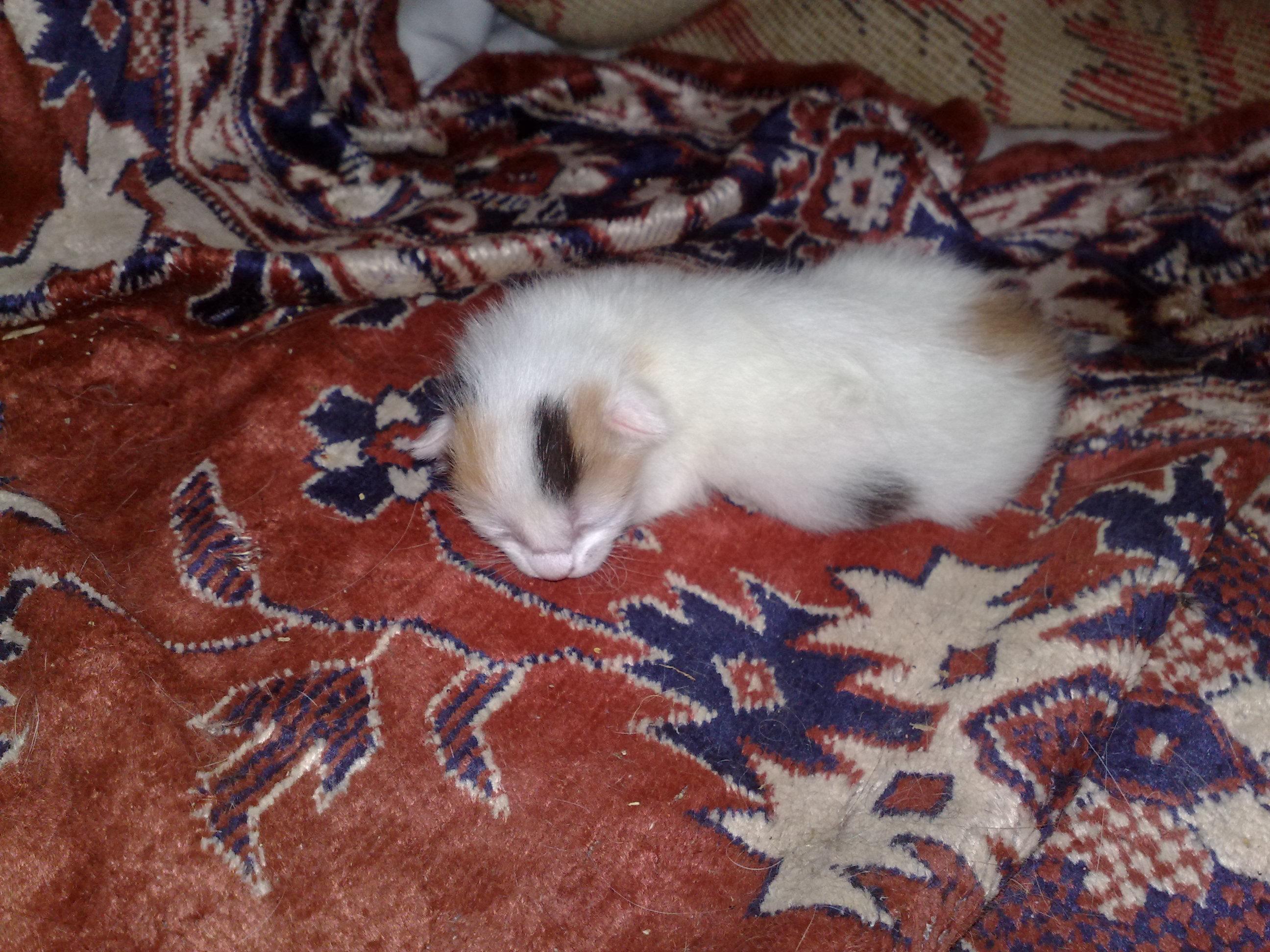 Домашние любимцы Кошки и Собаки - Страница 18 0802954001471862481