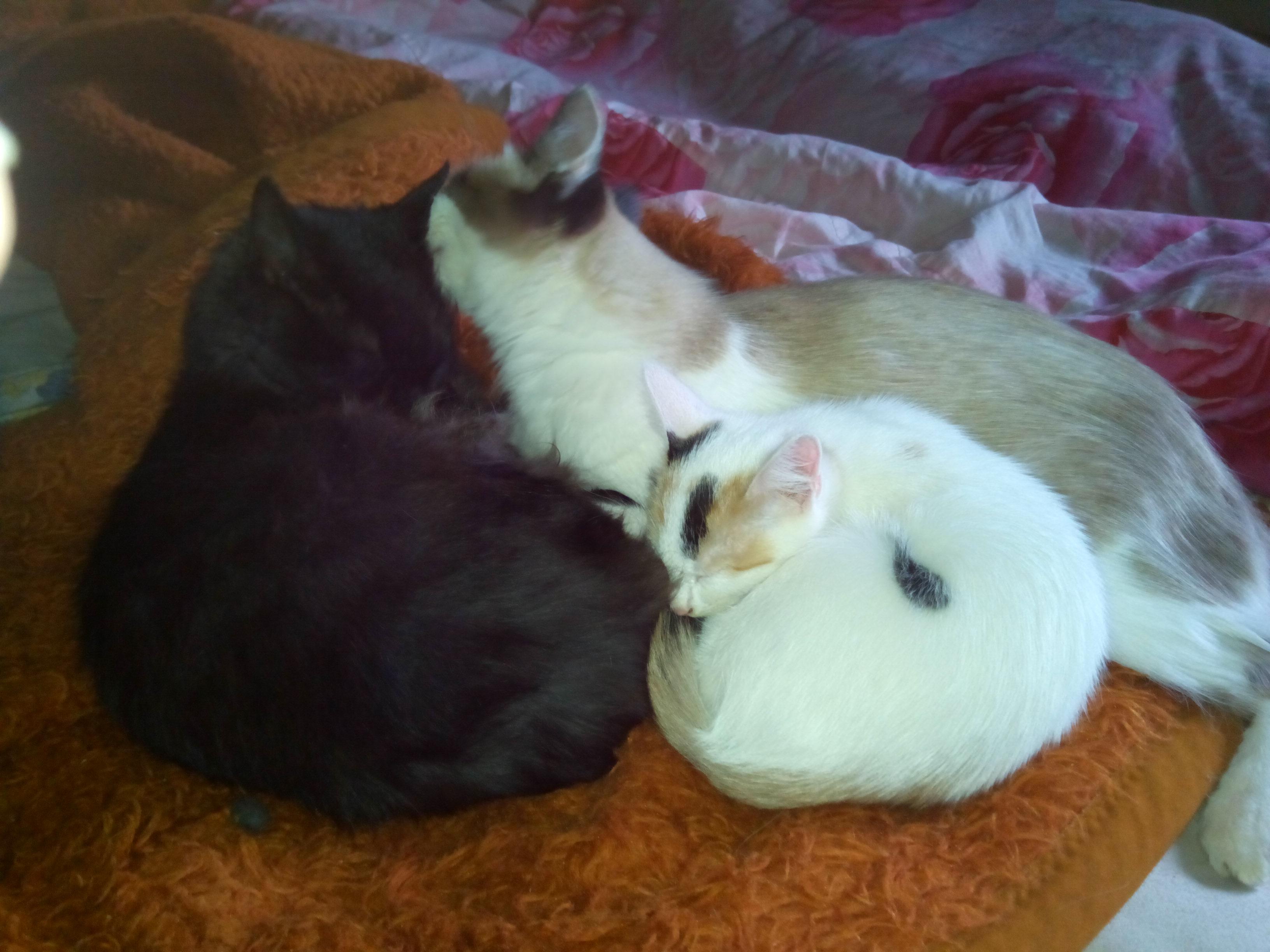 Домашние любимцы Кошки и Собаки - Страница 18 0211793001478516414