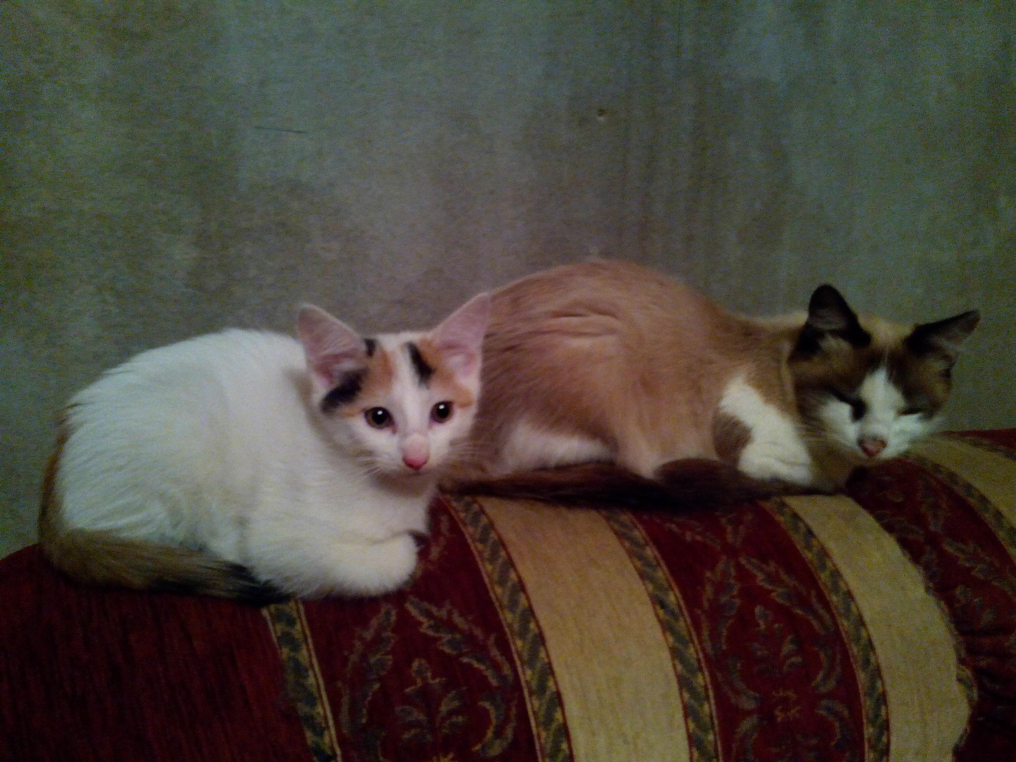 Домашние любимцы Кошки и Собаки - Страница 18 0725008001478516413