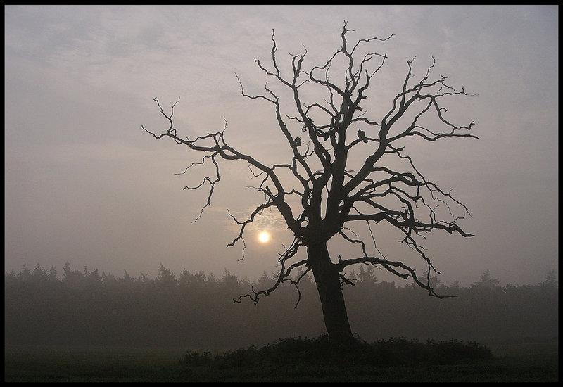 Перенос болезни на дерево или снять проклятье, наведенное через вольт 0077624001489167731
