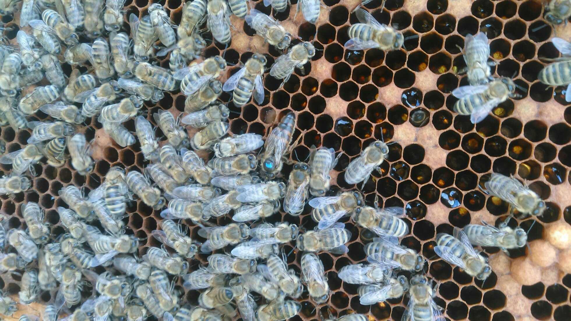 Про мёд, и не только... 0562326001490849152