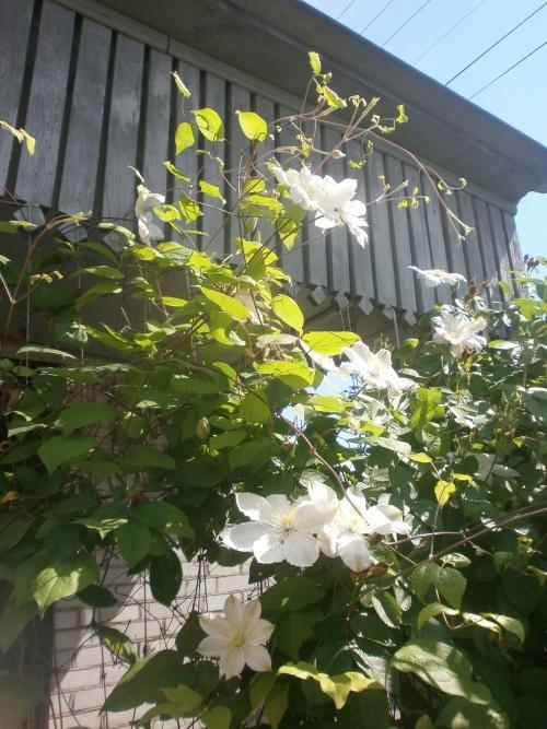 Які квіти прикрашають Ваші ґанки, підвіконня, балкони? 0034449001432734843
