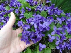 Фотоконкурс «Весна на ладошке». 0561078001458556042