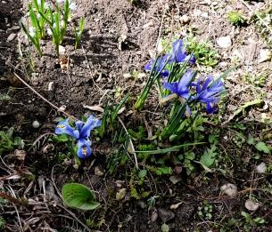 Фотоконкурс «Весна на ладошке». 0438515001458730943