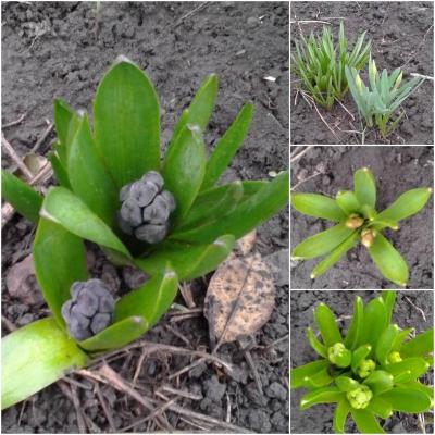 Фотоконкурс «Весна на ладошке». 0734618001459356835