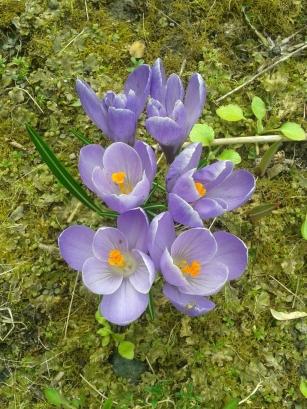 Фотоконкурс «Весна на ладошке». 0023330001459785899
