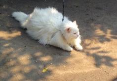 """Фотоконкурс """"Кошки на картошке"""" 0622727001464381219"""