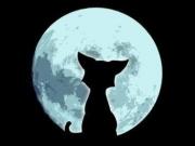 Фотоконкурс Лунная подкова 0587716001464457179
