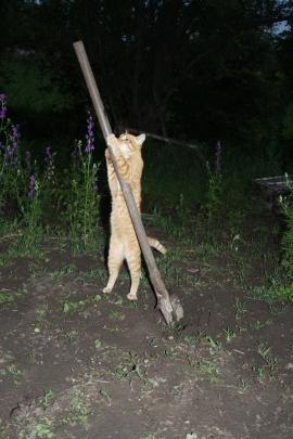 """Фотоконкурс """"Кошки на картошке"""" 0284792001464715693"""