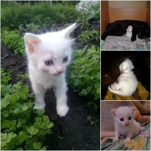 """Фотоконкурс """"Кошки на картошке"""" 0612682001464714464"""
