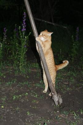 """Фотоконкурс """"Кошки на картошке"""" 0625394001464715692"""