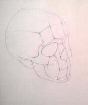 Рисуем обрубовку черепа 0135251001473252679