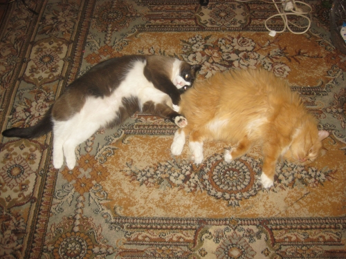 ВИДЕО котенок из 44-ой раздевалки (котенок от DMR) 0087941001474634415