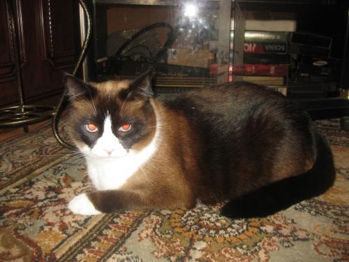 ВИДЕО котенок из 44-ой раздевалки (котенок от DMR) 0121418001474634849