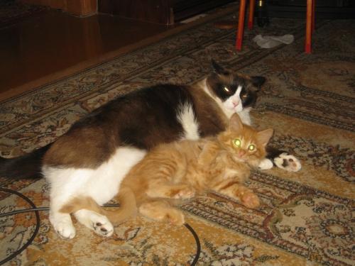 ВИДЕО котенок из 44-ой раздевалки (котенок от DMR) 0337522001474634974