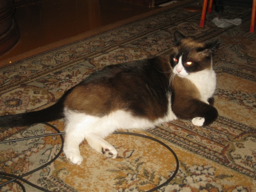 ВИДЕО котенок из 44-ой раздевалки (котенок от DMR) 0461944001474644387