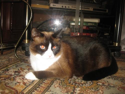 ВИДЕО котенок из 44-ой раздевалки (котенок от DMR) 0493678001474634929