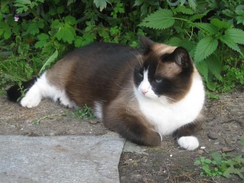 ВИДЕО котенок из 44-ой раздевалки (котенок от DMR) 0617844001474634720