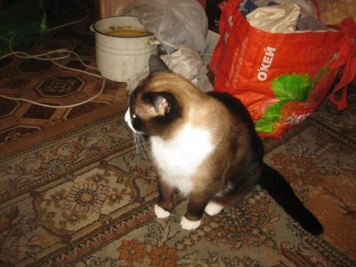 ВИДЕО котенок из 44-ой раздевалки (котенок от DMR) 0980568001474635019