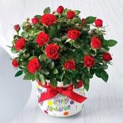 Поздравляем с Днем Рождения Людмилу (Людмила35) 0334279001485689264
