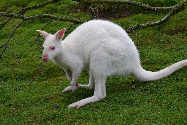 les animaux albinos 14