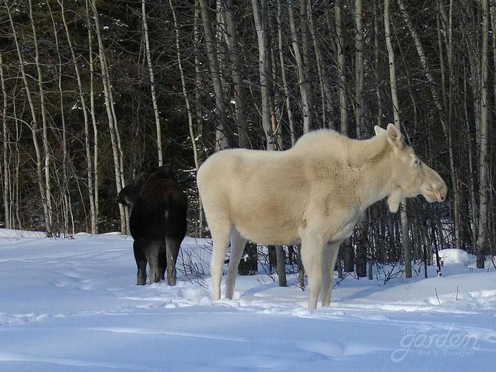 les animaux albinos 25