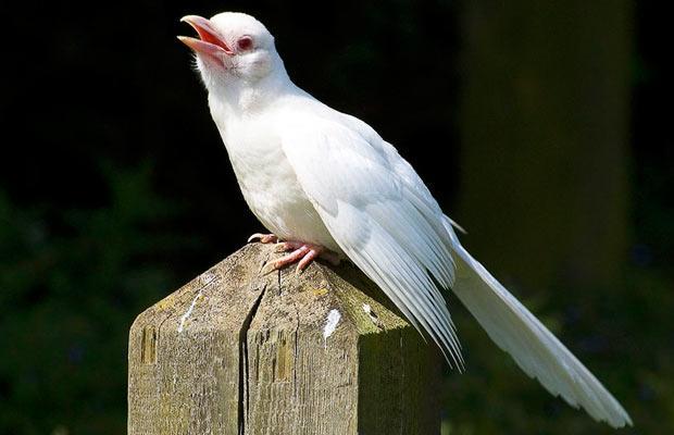 les animaux albinos 38