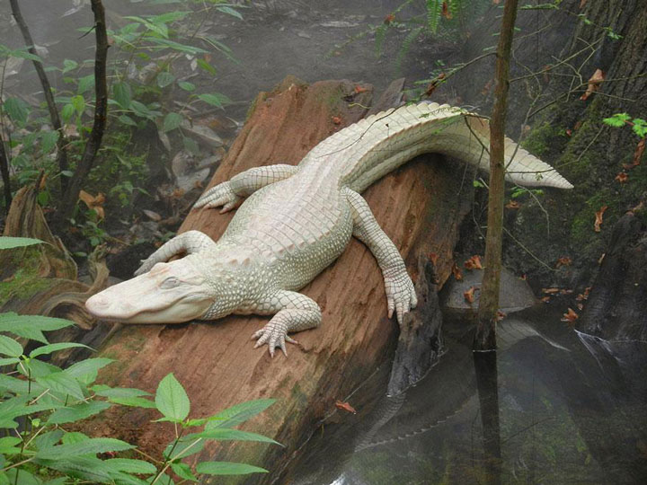 les animaux albinos 46