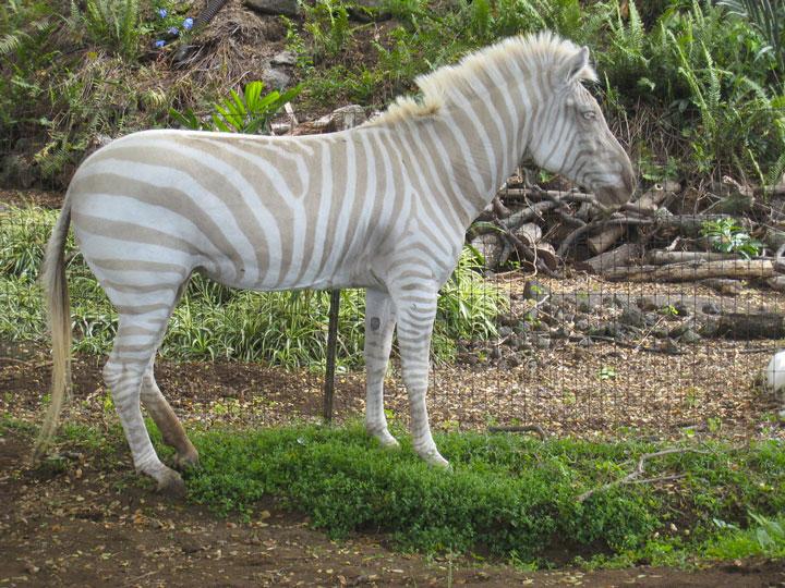 les animaux albinos 52