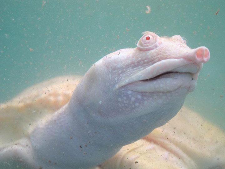 les animaux albinos 56