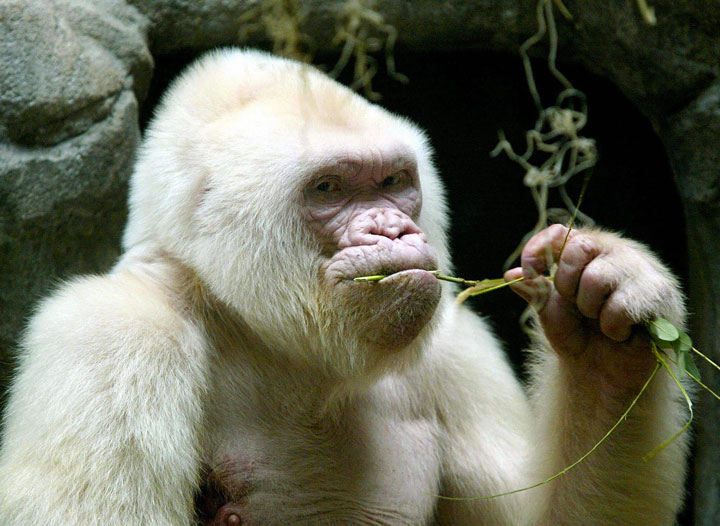 les animaux albinos 6