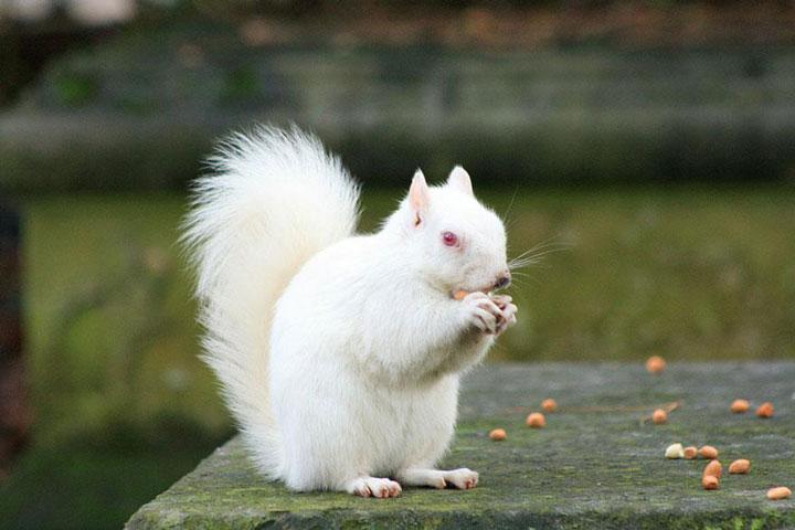 les animaux albinos 9