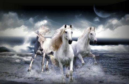 les chevaux.. - Page 3 Chevaux-sur-la-plage01b